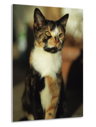 Portrait of a Calico Cat-Stephen Alvarez-Metal Print
