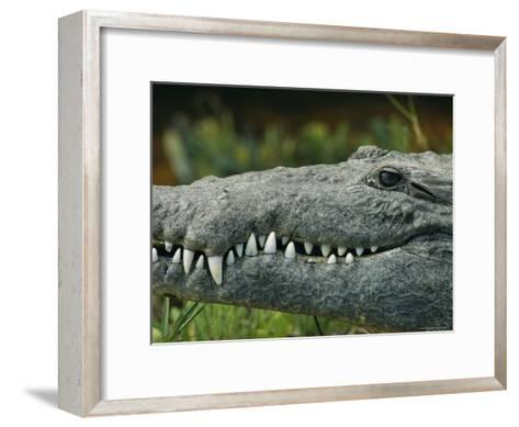 Close View of the Teeth of an American Crocodile-Klaus Nigge-Framed Art Print