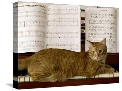 Family Cat Rests on a Piano Keyboard Beneath Sheet Music-Charles Kogod-Stretched Canvas Print