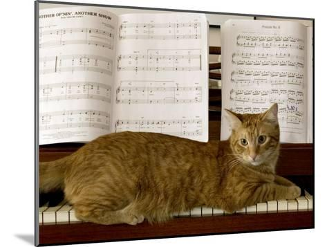 Family Cat Rests on a Piano Keyboard Beneath Sheet Music-Charles Kogod-Mounted Photographic Print