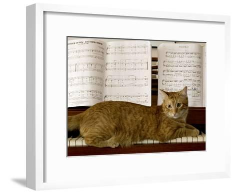 Family Cat Rests on a Piano Keyboard Beneath Sheet Music-Charles Kogod-Framed Art Print