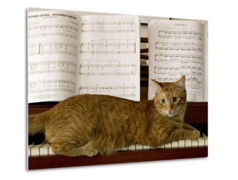 Family Cat Rests on a Piano Keyboard Beneath Sheet Music-Charles Kogod-Metal Print
