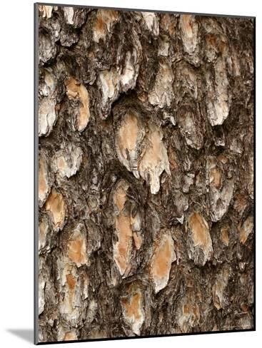 Close View of Pine Tree Bark-Charles Kogod-Mounted Photographic Print