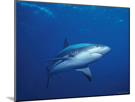 A Caribbean Reef Shark Cruising in Clear Blue Waters-Nick Caloyianis-Mounted Photographic Print