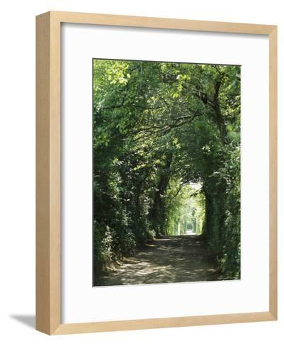 A Tree-Lined Country Road-Darlyne A^ Murawski-Framed Art Print