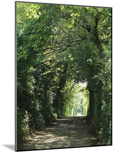 A Tree-Lined Country Road-Darlyne A^ Murawski-Mounted Photographic Print