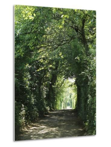 A Tree-Lined Country Road-Darlyne A^ Murawski-Metal Print