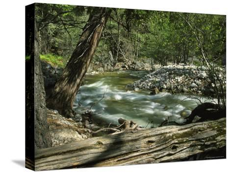 Creek Rushing Past Rocky Banks in a Forested Setting--Stretched Canvas Print