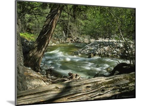Creek Rushing Past Rocky Banks in a Forested Setting--Mounted Photographic Print