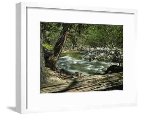 Creek Rushing Past Rocky Banks in a Forested Setting--Framed Art Print