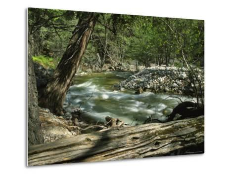 Creek Rushing Past Rocky Banks in a Forested Setting--Metal Print