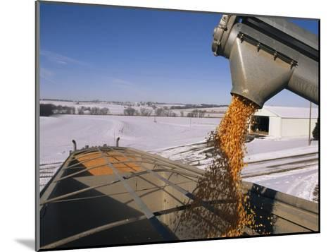 Corn Pours from an Auger into a Grain Truck-Joel Sartore-Mounted Photographic Print