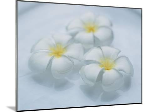 Plumeria Singapore Obtusa Blossoms Float in a Bowl of Water--Mounted Photographic Print