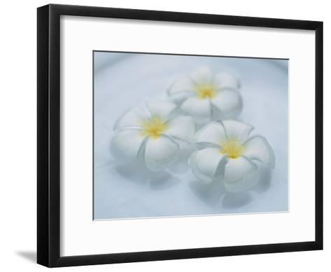 Plumeria Singapore Obtusa Blossoms Float in a Bowl of Water--Framed Art Print
