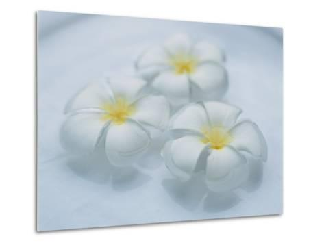 Plumeria Singapore Obtusa Blossoms Float in a Bowl of Water--Metal Print