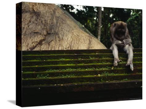 A Monkey Sits Contemplatively on a Temple Wall in the Ubud Monkey Forest--Stretched Canvas Print