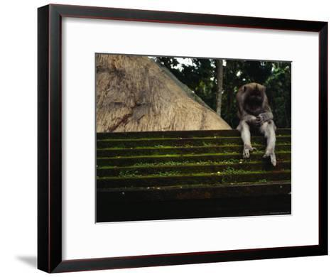 A Monkey Sits Contemplatively on a Temple Wall in the Ubud Monkey Forest--Framed Art Print