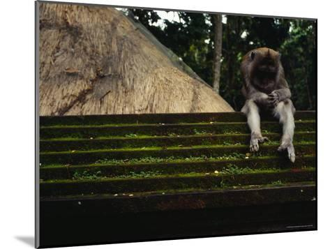 A Monkey Sits Contemplatively on a Temple Wall in the Ubud Monkey Forest--Mounted Photographic Print