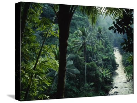 Agung River Cuts Through Desnse Jungle and Palm Trees--Stretched Canvas Print