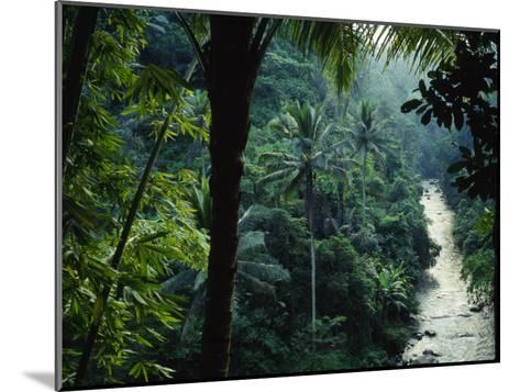 Agung River Cuts Through Desnse Jungle and Palm Trees--Mounted Photographic Print