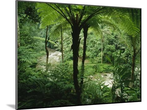 The Agung River Cuts Through a Dense Rain Forest of Ferns and Trees--Mounted Photographic Print