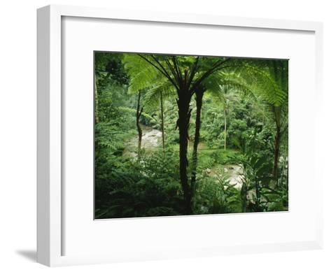 The Agung River Cuts Through a Dense Rain Forest of Ferns and Trees--Framed Art Print