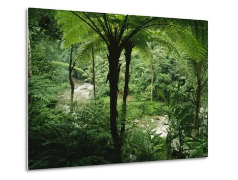 The Agung River Cuts Through a Dense Rain Forest of Ferns and Trees--Metal Print