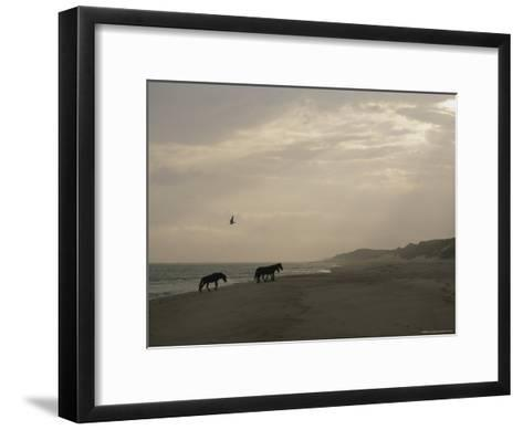 A Group of Wild Horses in the Dunes of Sable Island--Framed Art Print