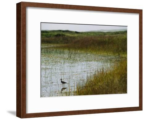 Beach Grass and an American Avocet on the Shore of Sable Island--Framed Art Print