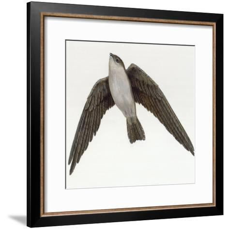 Map of Range of White-Nest (Aerodramus Fuciphagus) and Black-Nest (Aerodramus Maximus) Swiftlets-Sally J. Bensusen-Framed Art Print
