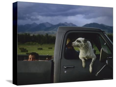 A Young Boy and His Dog Ride in His Grandfathers Truck-Joel Sartore-Stretched Canvas Print