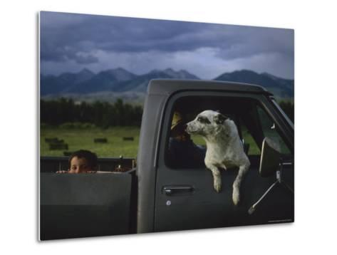 A Young Boy and His Dog Ride in His Grandfathers Truck-Joel Sartore-Metal Print