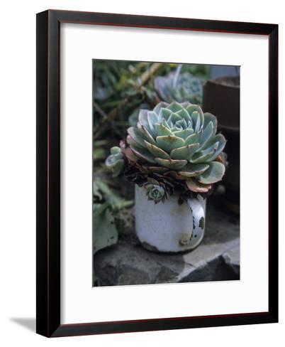 A Sempervivum Succulent Plant Grows in a Tin Mug-David Evans-Framed Art Print