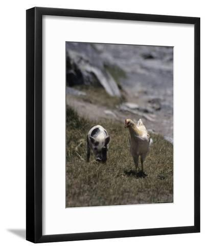 A Pig and Chicken Walk on the Slope of a Hill-David Evans-Framed Art Print