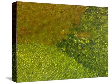 Pebbles on a Creek Bottom Seen Through Water-Raul Touzon-Stretched Canvas Print