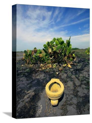 An Toilet on a Black Sand Beach with Cacti-Raul Touzon-Stretched Canvas Print