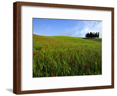Poppies in a Wheatfield-Raul Touzon-Framed Art Print