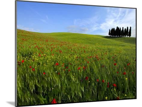 Poppies in a Wheatfield-Raul Touzon-Mounted Photographic Print