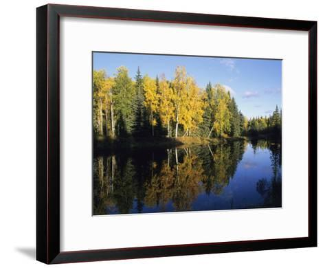 Birch Trees Reflected in a Pond in the Fall-Rich Reid-Framed Art Print