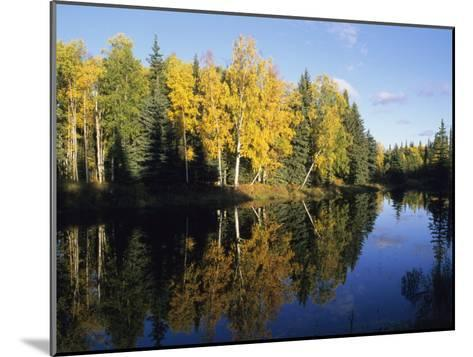 Birch Trees Reflected in a Pond in the Fall-Rich Reid-Mounted Photographic Print