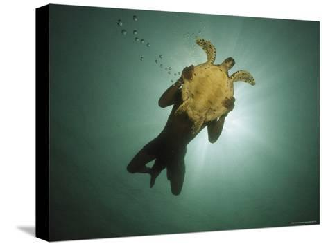 Underwater View of Swimmer and Turtle Silhouetted against the Sun-Nicolas Reynard-Stretched Canvas Print