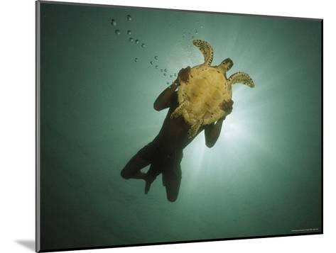 Underwater View of Swimmer and Turtle Silhouetted against the Sun-Nicolas Reynard-Mounted Photographic Print
