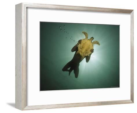 Underwater View of Swimmer and Turtle Silhouetted against the Sun-Nicolas Reynard-Framed Art Print