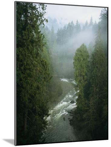 A Salmon Spawning River Runs Through a Temperate Rainforest-Taylor S^ Kennedy-Mounted Photographic Print