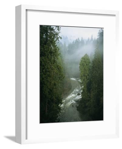 A Salmon Spawning River Runs Through a Temperate Rainforest-Taylor S^ Kennedy-Framed Art Print