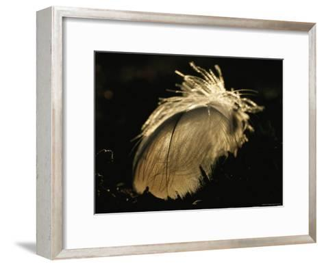 A Close View of a Backlit Feather-Norbert Rosing-Framed Art Print