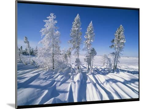 Snow-Blanketed Evergreen Trees in Wapusk National Park-Norbert Rosing-Mounted Photographic Print