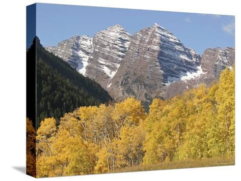 The Majestic Maroon Bells are Framed by Aspen and Evergreen Trees-Charles Kogod-Stretched Canvas Print