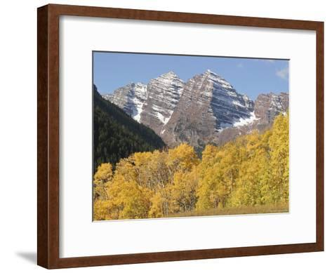The Majestic Maroon Bells are Framed by Aspen and Evergreen Trees-Charles Kogod-Framed Art Print