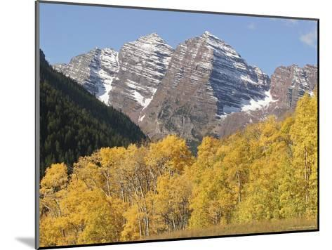 The Majestic Maroon Bells are Framed by Aspen and Evergreen Trees-Charles Kogod-Mounted Photographic Print